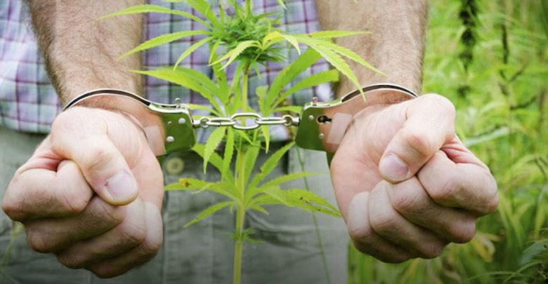 Фото сбор марихуаны воск марихуаны